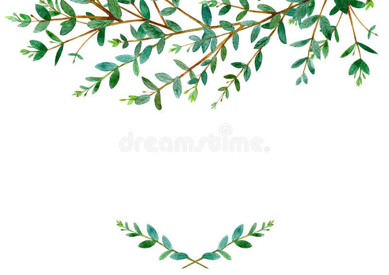 Eucalyptus Flower Clipart.