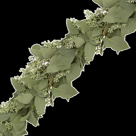 Garland Eucalyptus cinerea Cut flowers Plants Leaf.