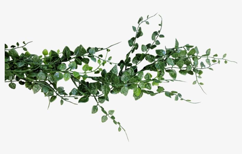 Eucalyptus Garland Png.