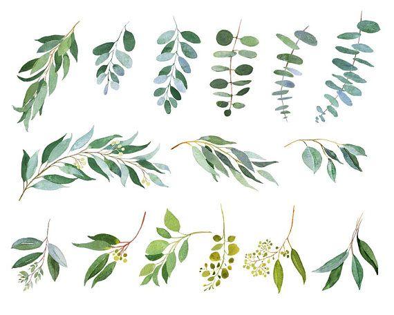 Eucalyptus Clipart, Watercolor illustrations, Wedding.
