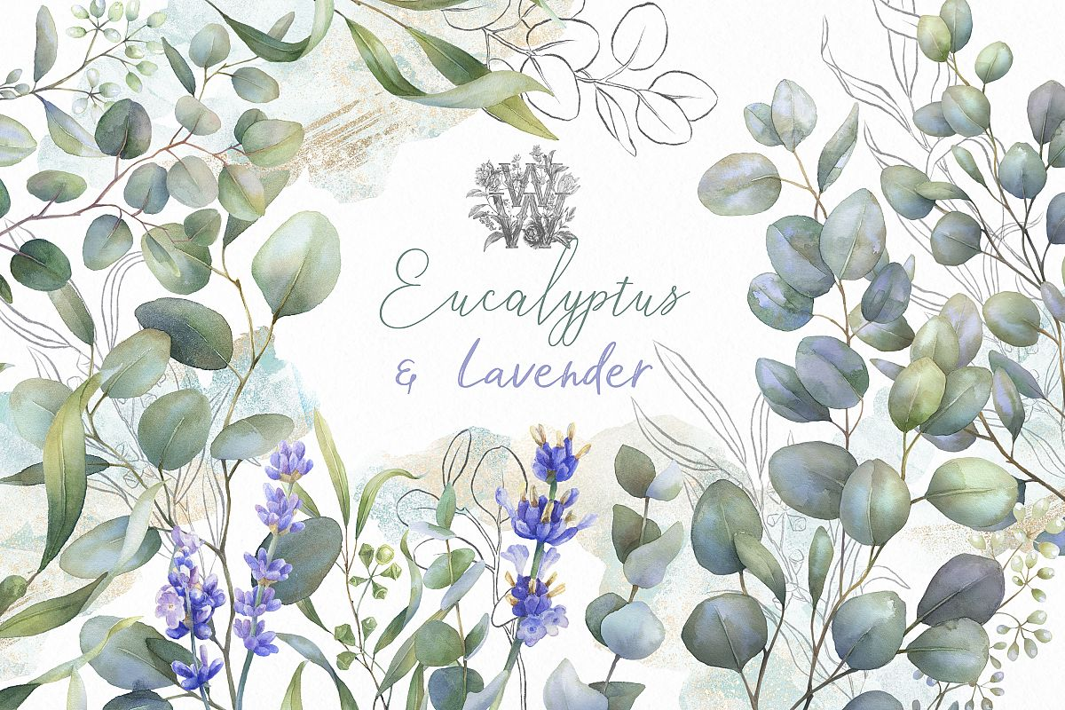 Eucalyptus greenery clip art, watercolor lavender clipart.