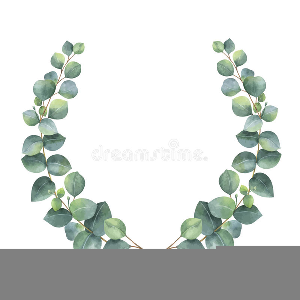 Eucalyptus Leaves Clipart.