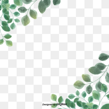Eucalyptus Leaves PNG Images.