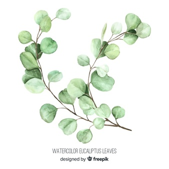 Eucalyptus Vectors, Photos and PSD files.