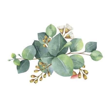 Eucalyptus leaves clipart 7 » Clipart Portal.