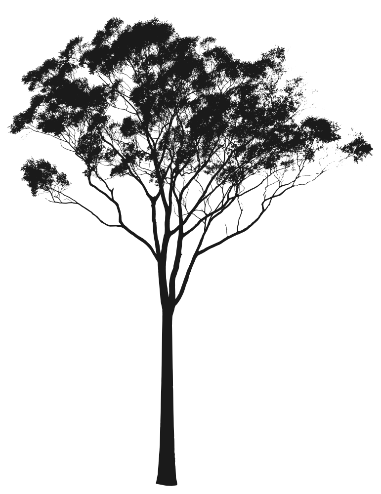 Eucalyptus or Gum Tree Silhouette Australia.