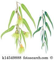 Eucalyptus tree Clip Art EPS Images. 250 eucalyptus tree clipart.