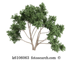 Eucalyptus tree Clip Art and Stock Illustrations. 112 eucalyptus.
