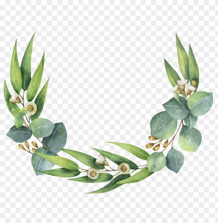roseta de hojas verdes.