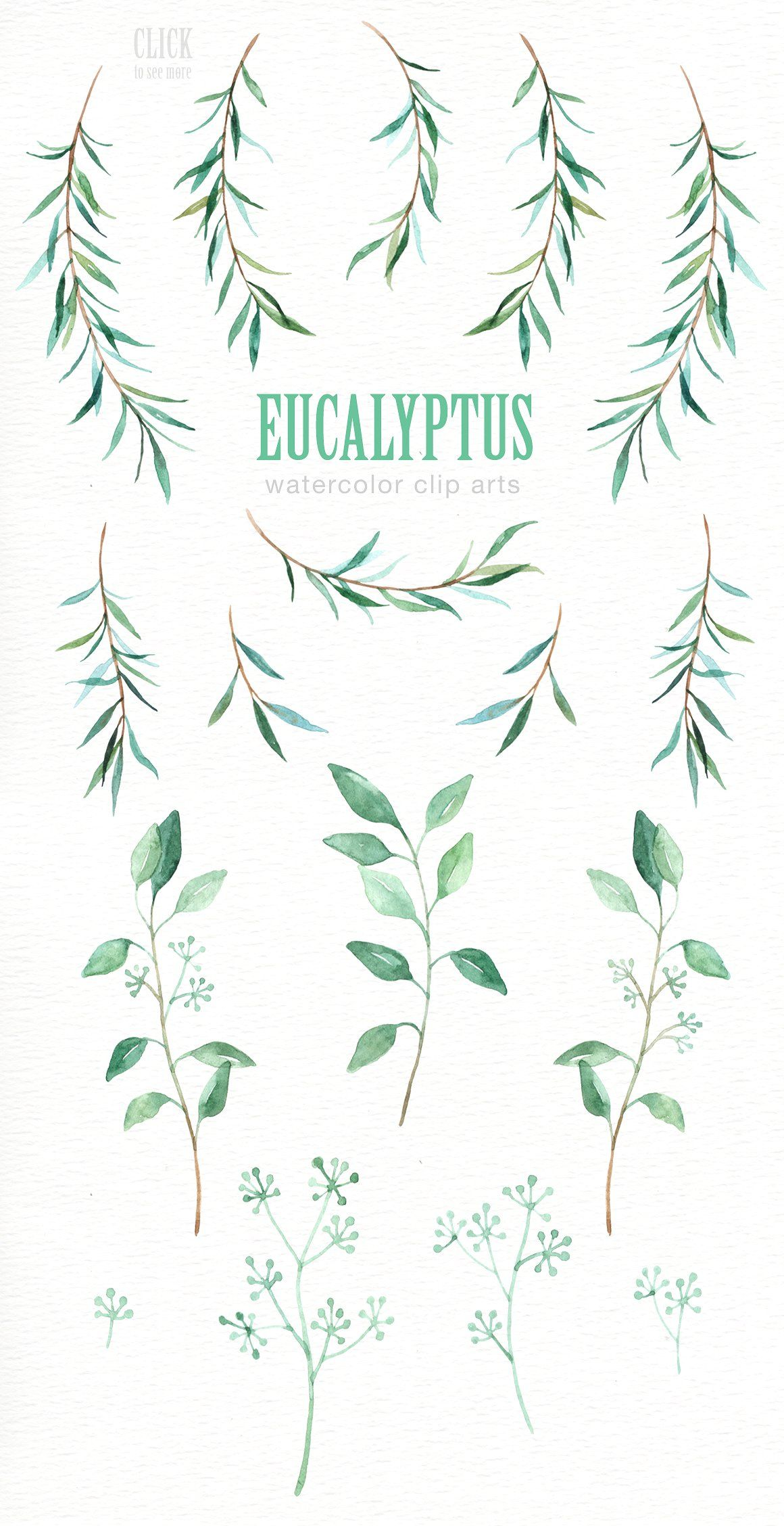 Eucalyptus Leaf Watercolor clipart #palette#Included#fresh.