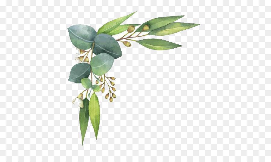 Watercolor Eucalyptus Leaves at GetDrawings.com.