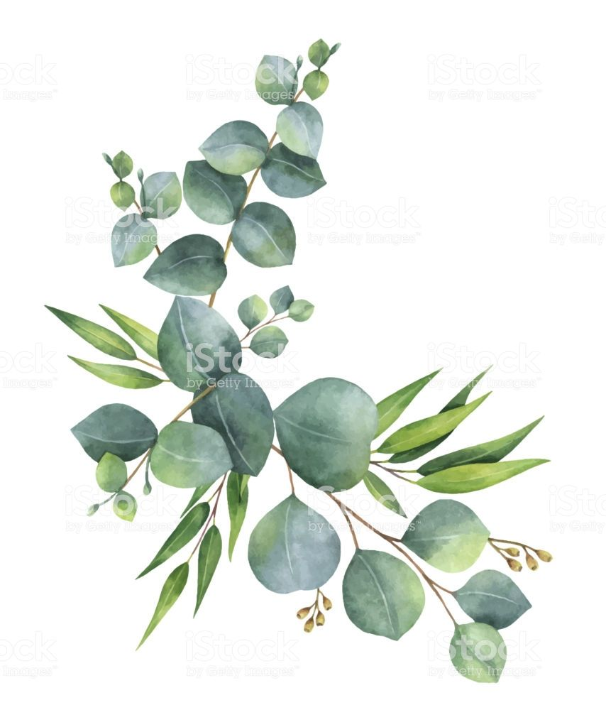 Watercolor vector wreath with green eucalyptus leaves and.