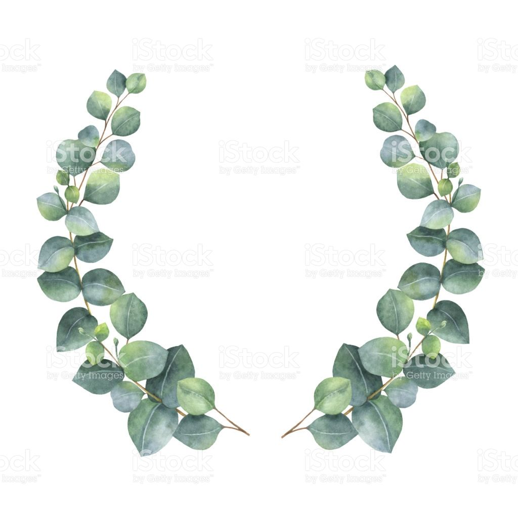 Watercolor hand painted wreath with green eucalyptus leaves and.