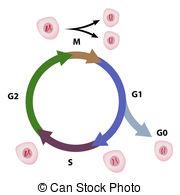 Eukaryote Clip Art and Stock Illustrations. 122 Eukaryote EPS.