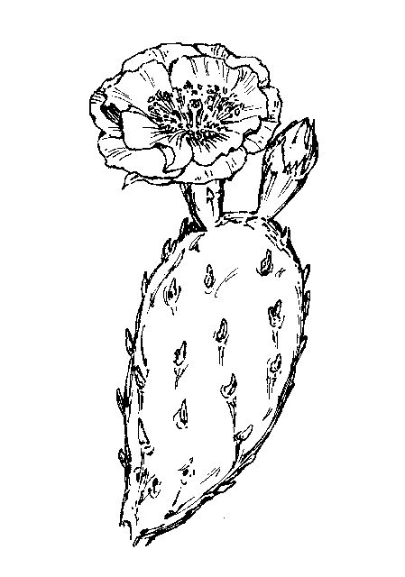 succulent line drawing euphorbia.