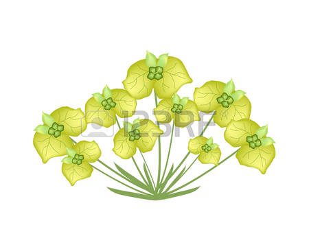 163 Euphorbia Stock Vector Illustration And Royalty Free Euphorbia.