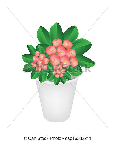 Vector Clip Art of Fresh Crown of Thorns in A Flower Pot.