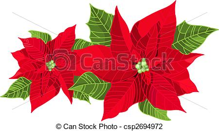 Vector Illustration of Christmas decoration poinsettia flower.