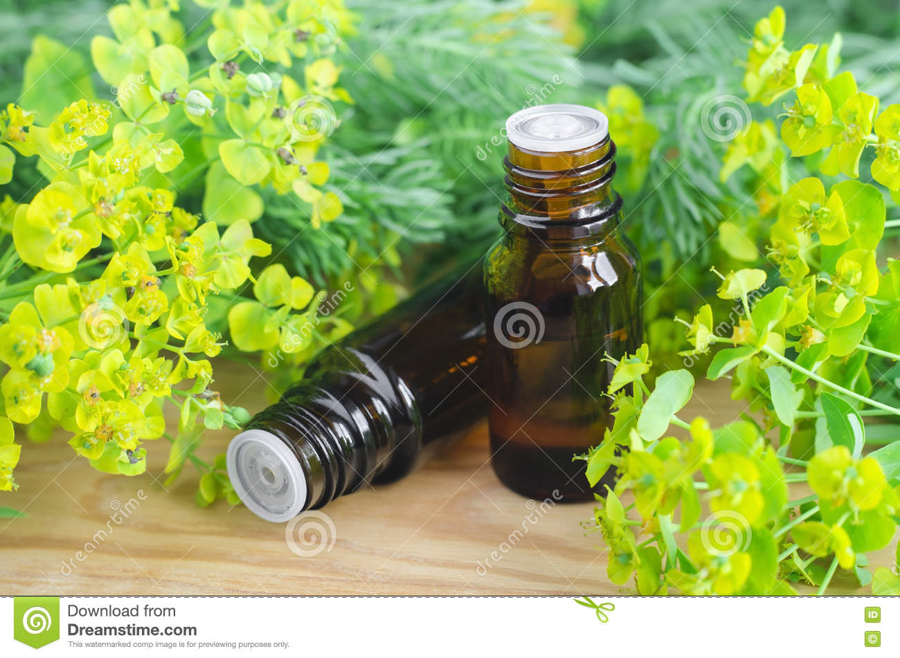 Two Bottles Of Euphorbia Cyparissias, Cypress Spurge Extract.