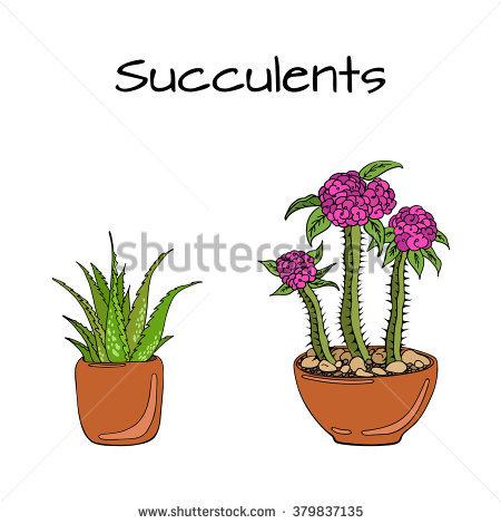 Euphorbia Milii Stock Vectors & Vector Clip Art.