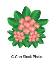 Euphorbia milii Vector Clipart EPS Images. 5 Euphorbia milii clip.