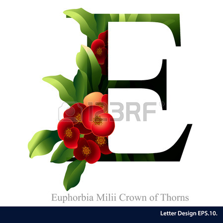 Letter E Vector Alphabet With Euphorbia Milii Crown Of Thorns.