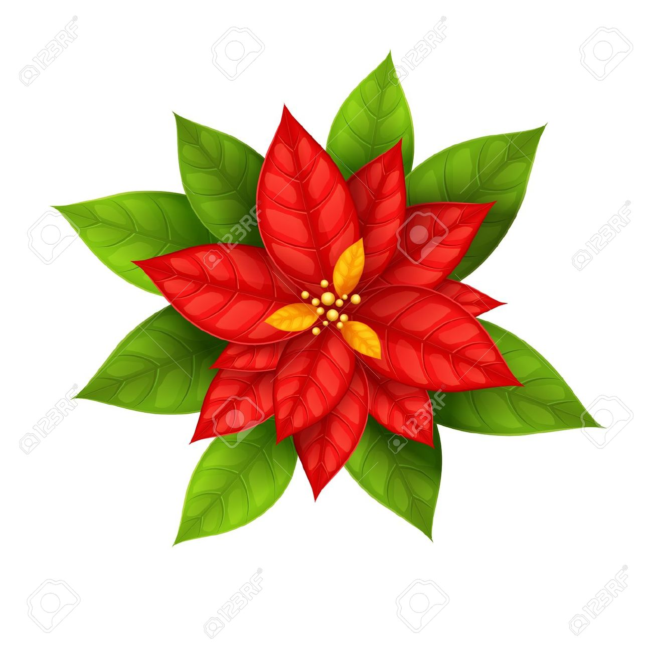 5,937 Poinsettia Stock Vector Illustration And Royalty Free.