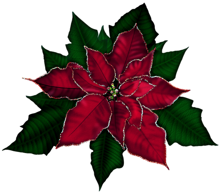 Png christmas poinsettia clipart.