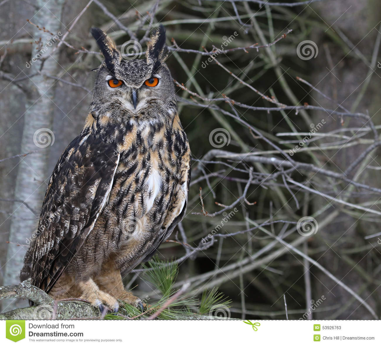 Eurasian Eagle Owl In A Tree Stock Photo.