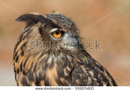 European Eagle Owl Stock Photos, Royalty.