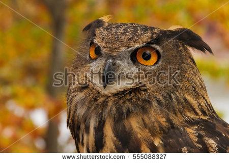 Eagle Owl Stock Photos, Royalty.