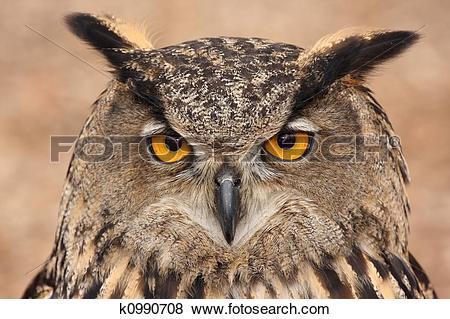 Pictures of Eurasian Eagle Owl k0990708.