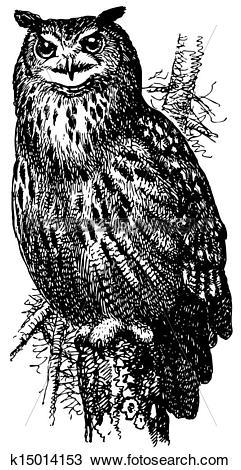 Clipart of Bird Eurasian Eagle.