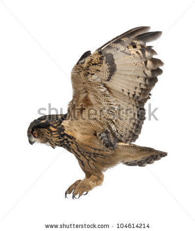 Owl Flying Stock Images, Royalty.