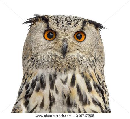 Portrait Eurasian Eagleowl Bubo Bubo Species Stock Photo 102225454.