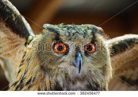 Eurasian Eagle Owl Stock Photos, Royalty.