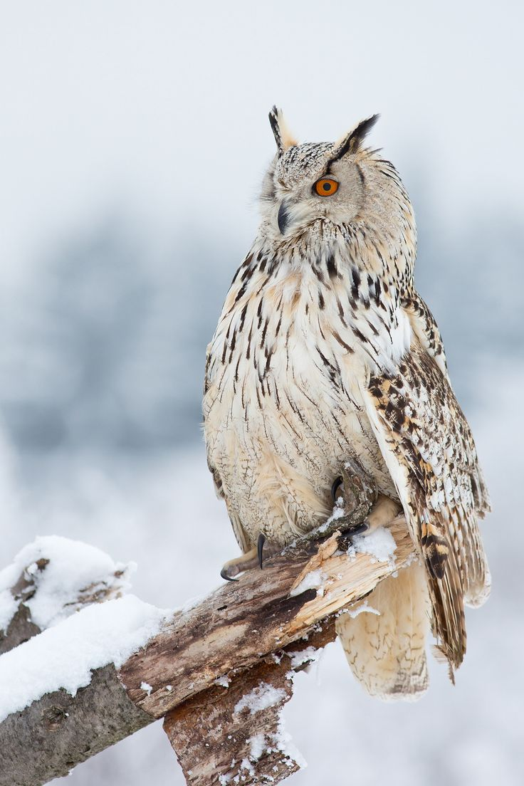 1000+ images about Wise Owls on Pinterest.