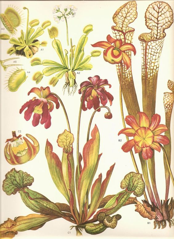 I'm planning a carnivorous plant garden 1/2 sleeve and found some.