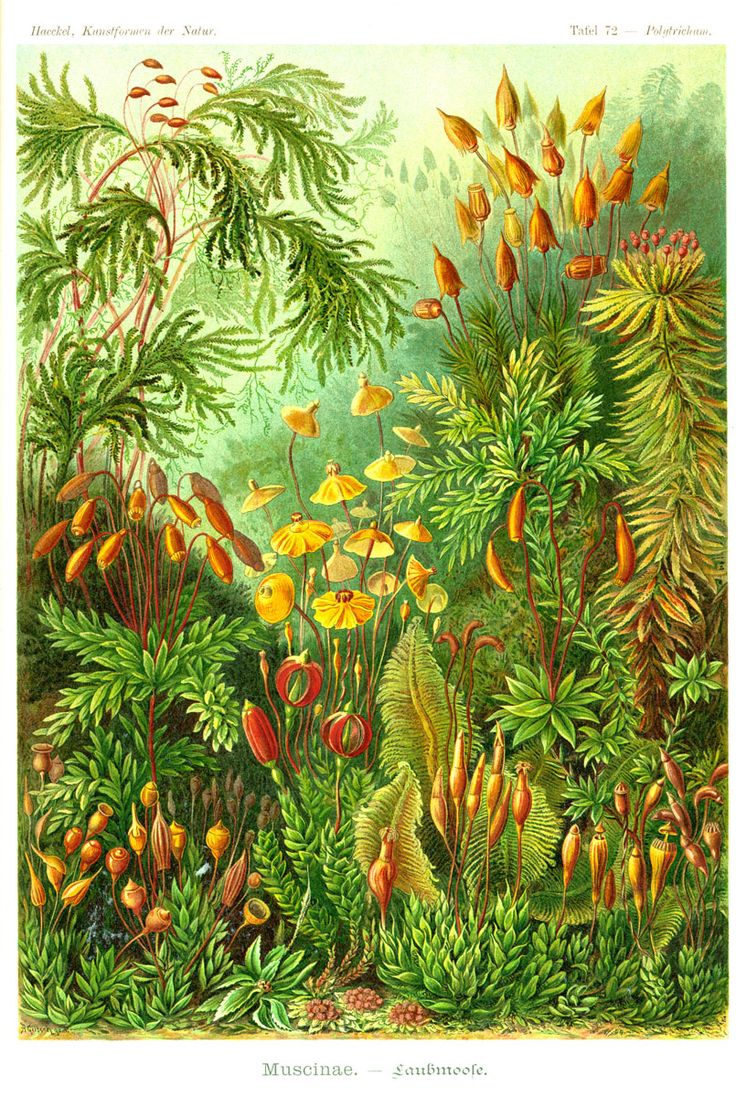 1000+ images about Ernst Haeckel.