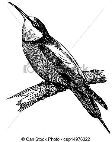 Vector Illustration of Bird European Bee.