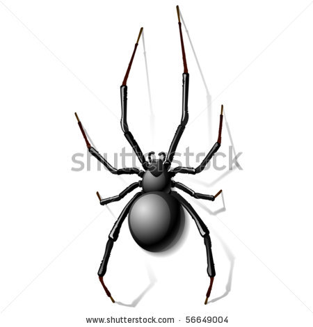 of a black widow spider on a white background in a vector clip art.