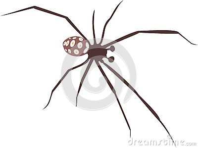 Mediterranean Black Widow Stock Vector.