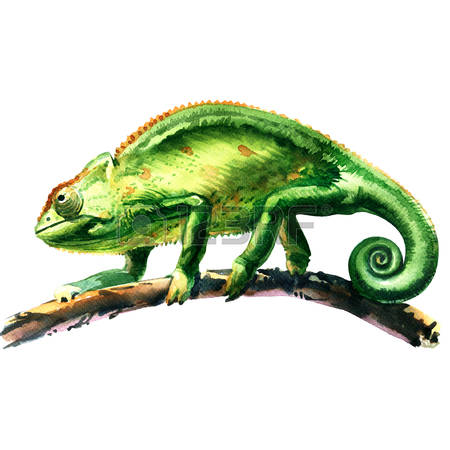 2,881 Chameleon Cliparts, Stock Vector And Royalty Free Chameleon.