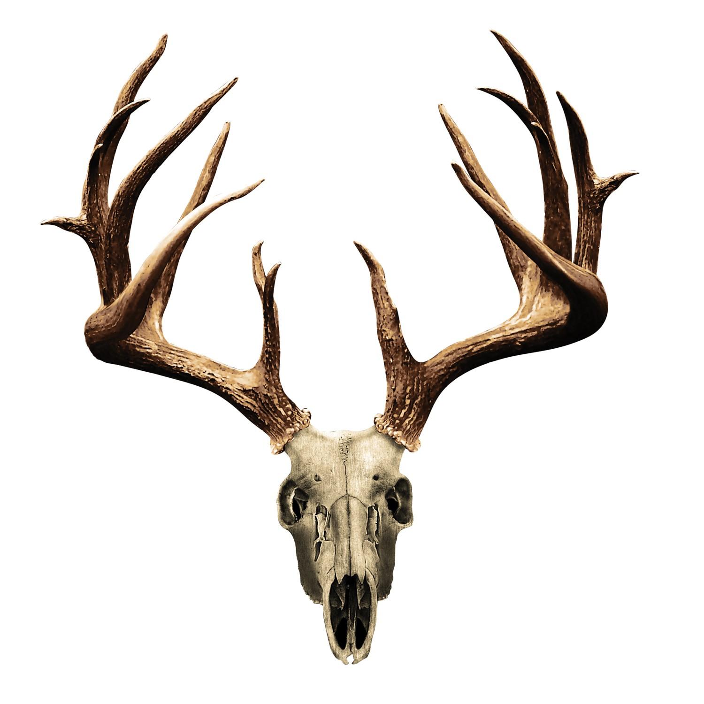 Deer Skull Clipart.