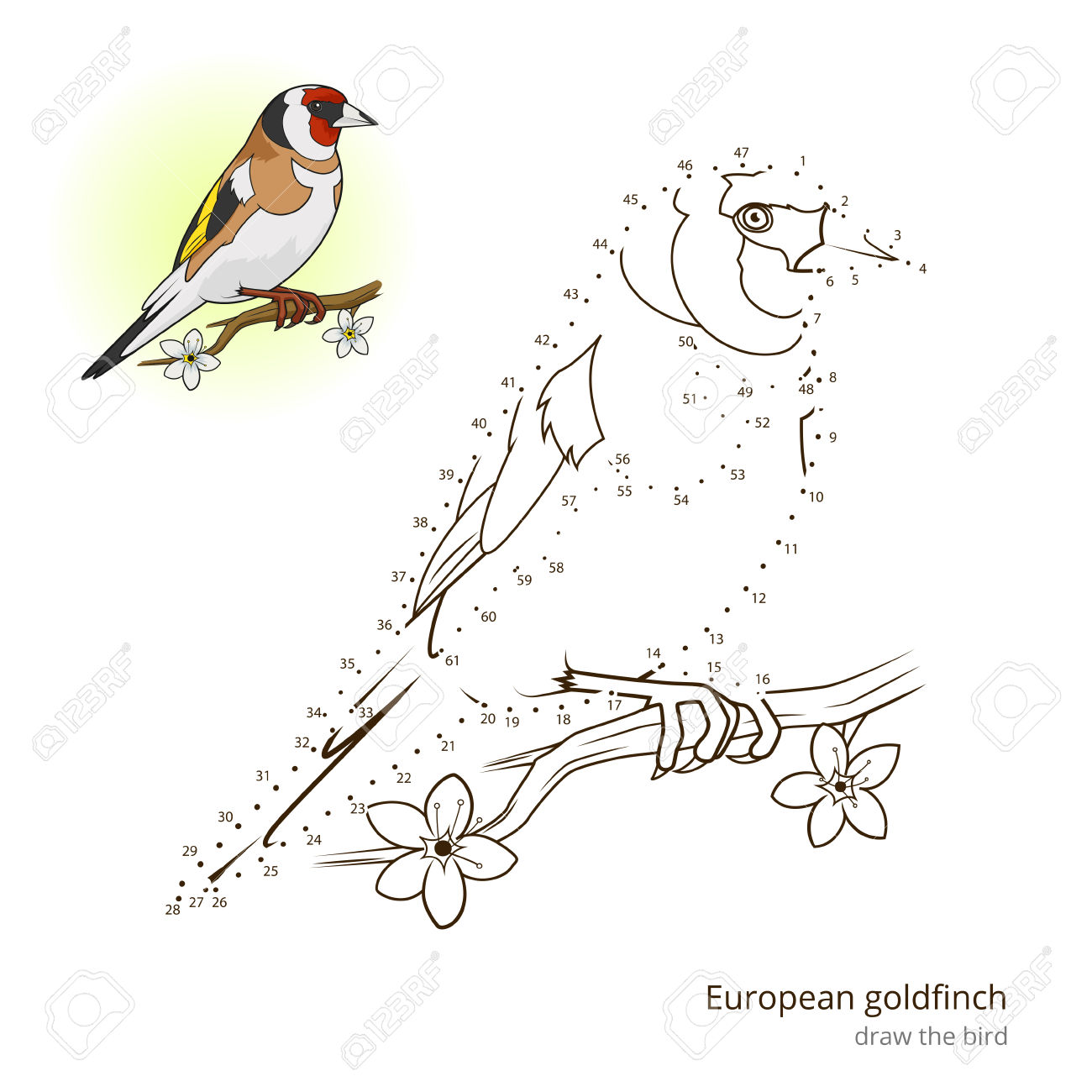 European Goldfinch Learn Birds Educational Game Learn To Draw.