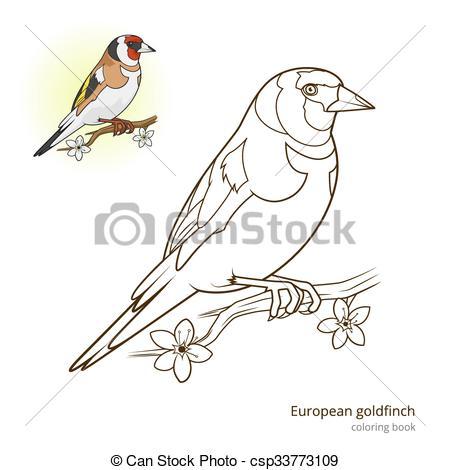 Vector Clipart of European goldfinch color book vector.