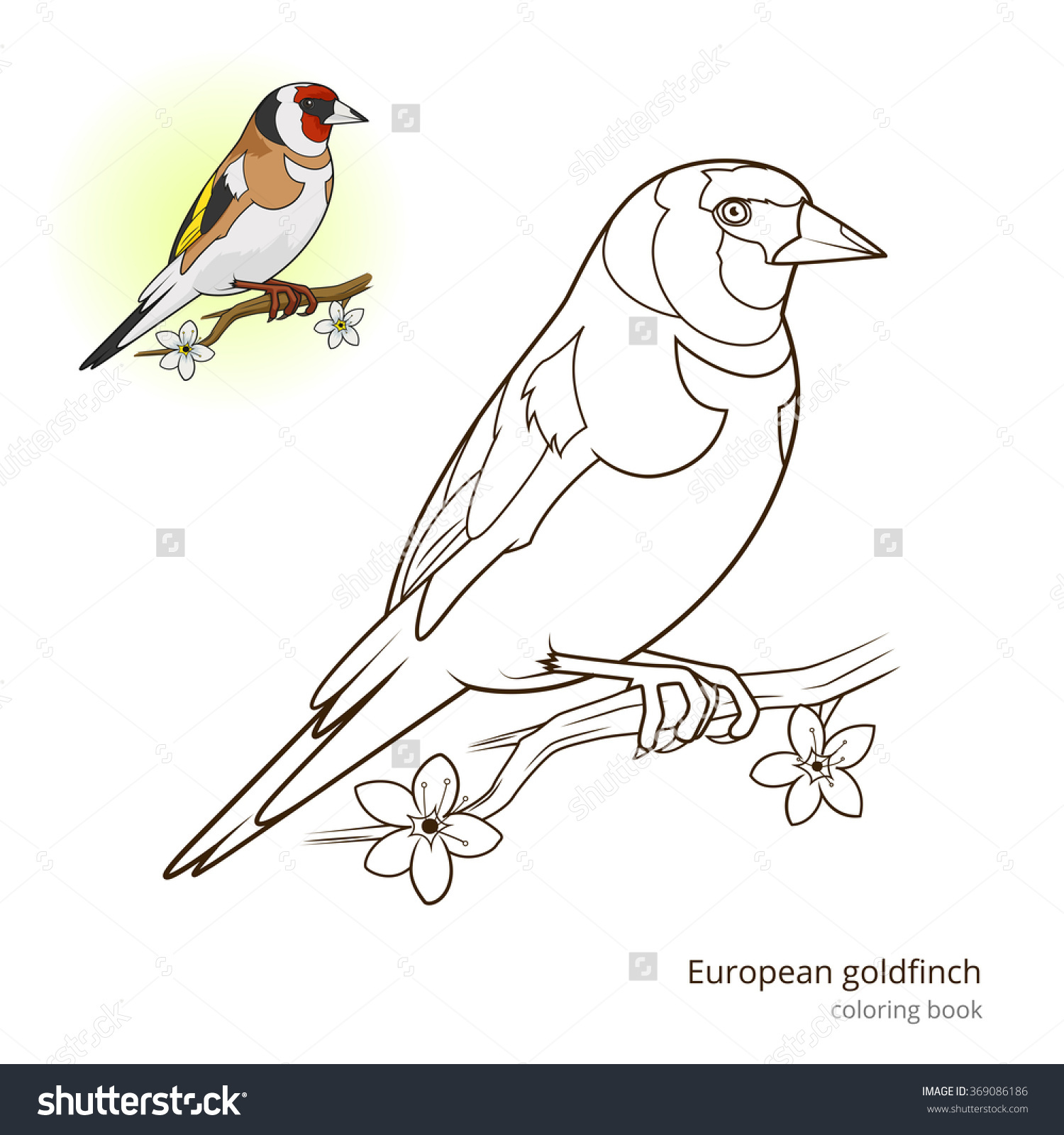 European Goldfinch Bird Learn Birds Educational Stock Illustration.