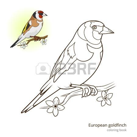 European Goldfinch Bird Learn Birds Educational Game Coloring.