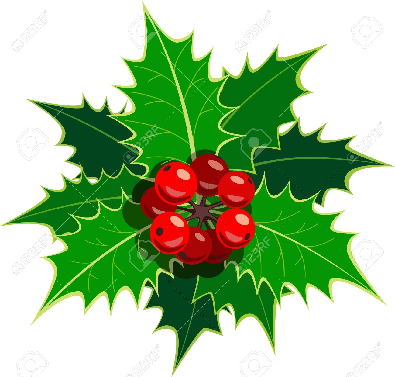 Single Sprig Of European Holly Royalty Free Cliparts, Vectors, And.