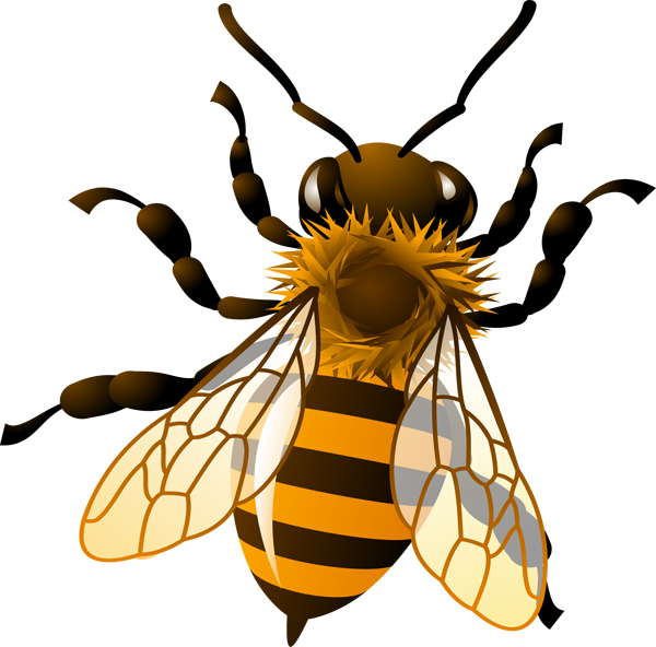 Honey bee clipart transparent.